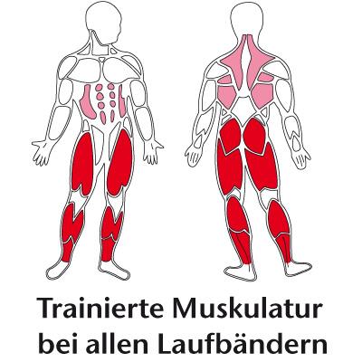 Effektives Training diverser Muskelgruppen